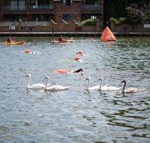 Thames Marathon (14km Henley to Marlow)