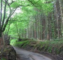 Treforest 10k