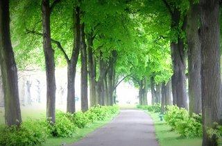 Wandsworth Park 10k