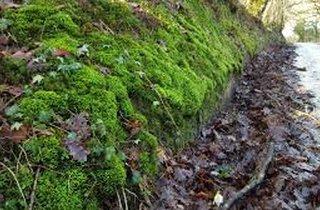 St illtyds Trail Race
