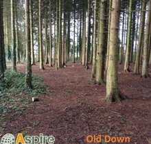 Old Down Estate 5/10k plus Family Fun Runs - This event has been cancelled