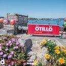 ÖTILLÖ Swimrun Sprint Isles of Scilly - 2019 Image 3